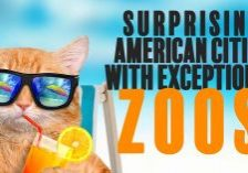 Fun-Surprising-American-Cities-With-Exceptional-Zoos_